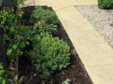 Easy Plants for a Front Garden