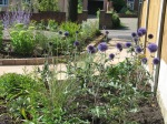 Drought resistant planting